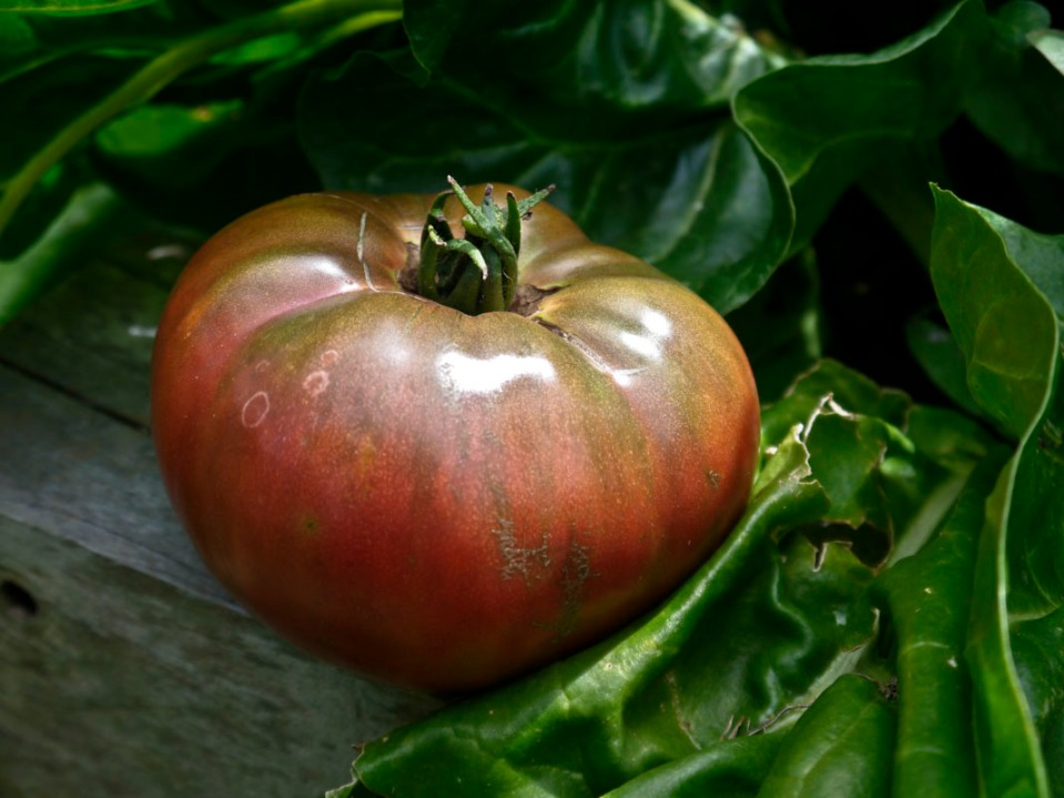 Just a divine heirloom variety ... a must in the summer garden.