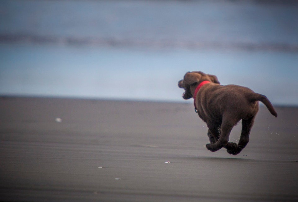 How much fun can a puppy have at the beach?