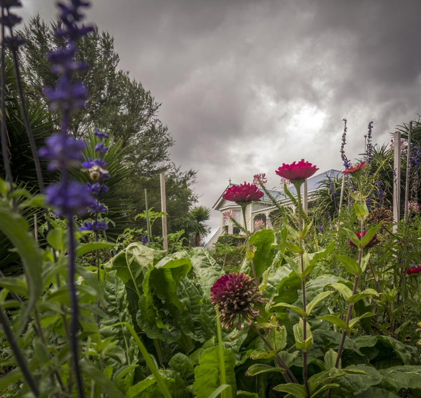 How moody is this pic! The vege garden is looking a tad shabby!