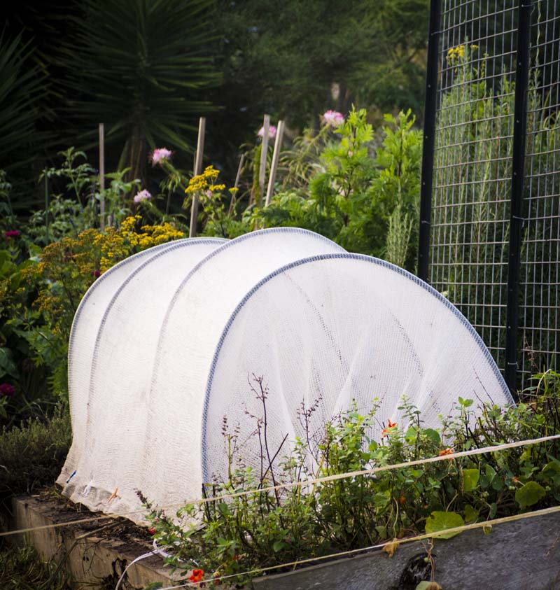 Cloche. Those seedlings are tucked in and doing nicely in their sleeping bag