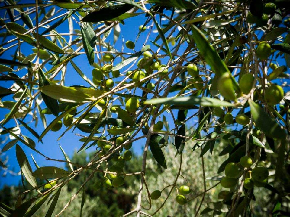 At long last ... olives!