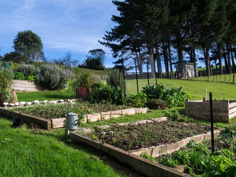 Garden madness ... alliums and brassicas