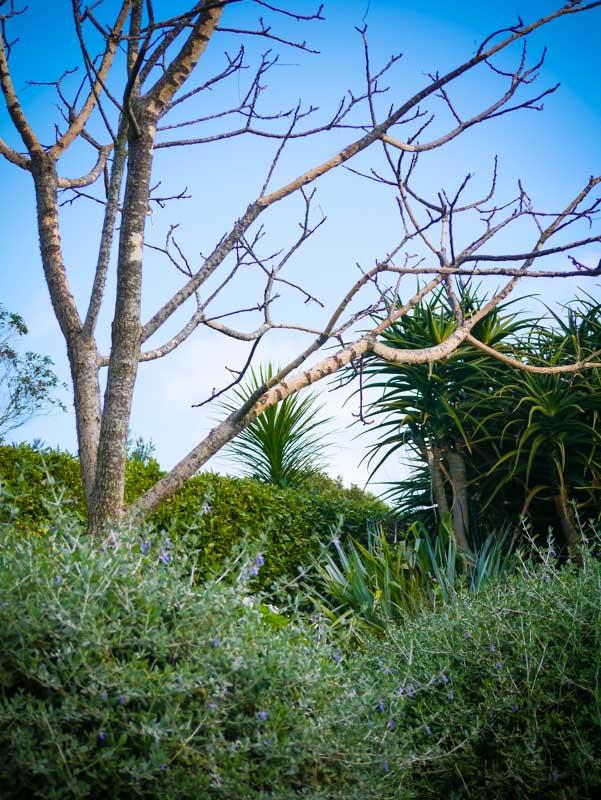 possum-damaged-tree-160713-1030327