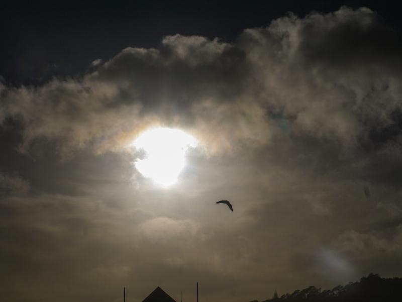 Sun, clouds and seagull. Muriwai beach