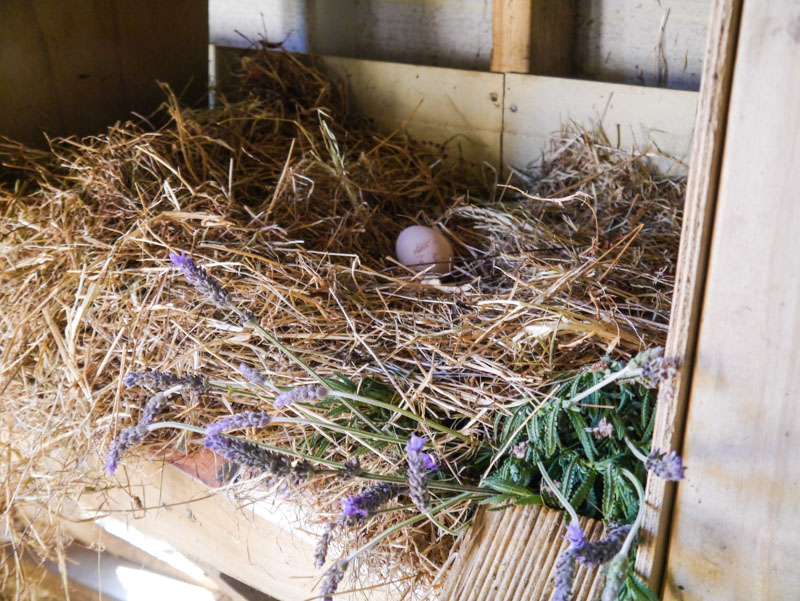 Nice .. nothing like a bit of lavender for the girls nest box.