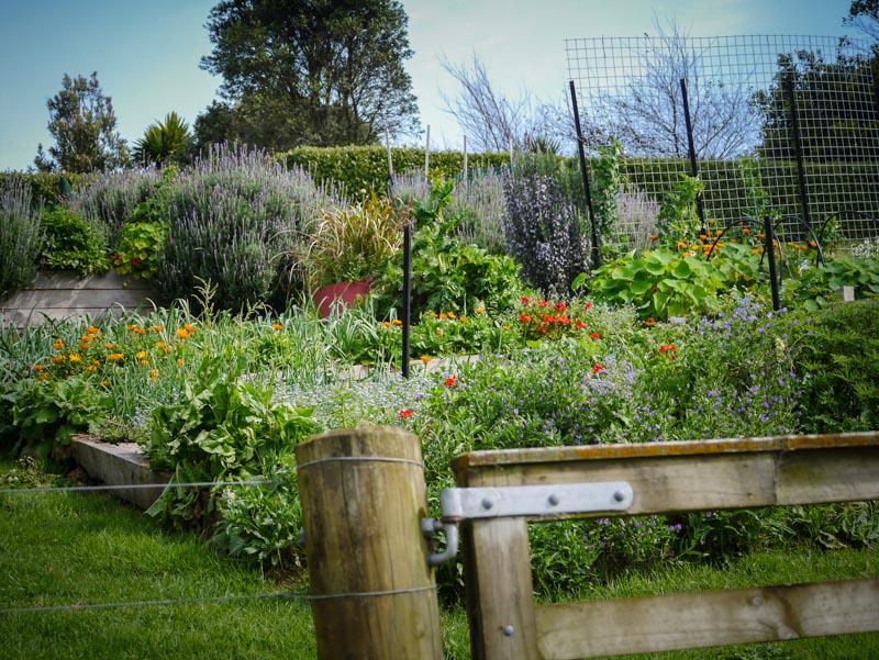 Loving the garden in spring.