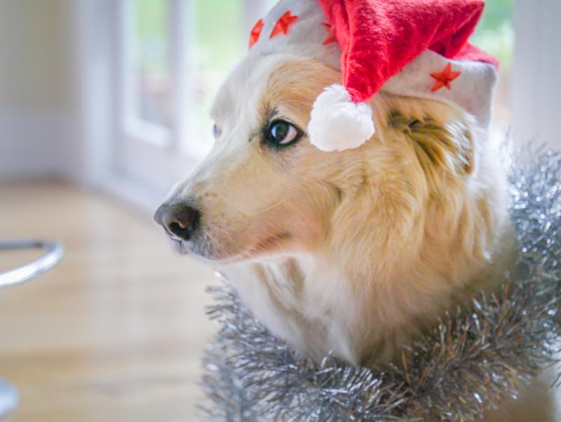 Dan Christmas-1040792