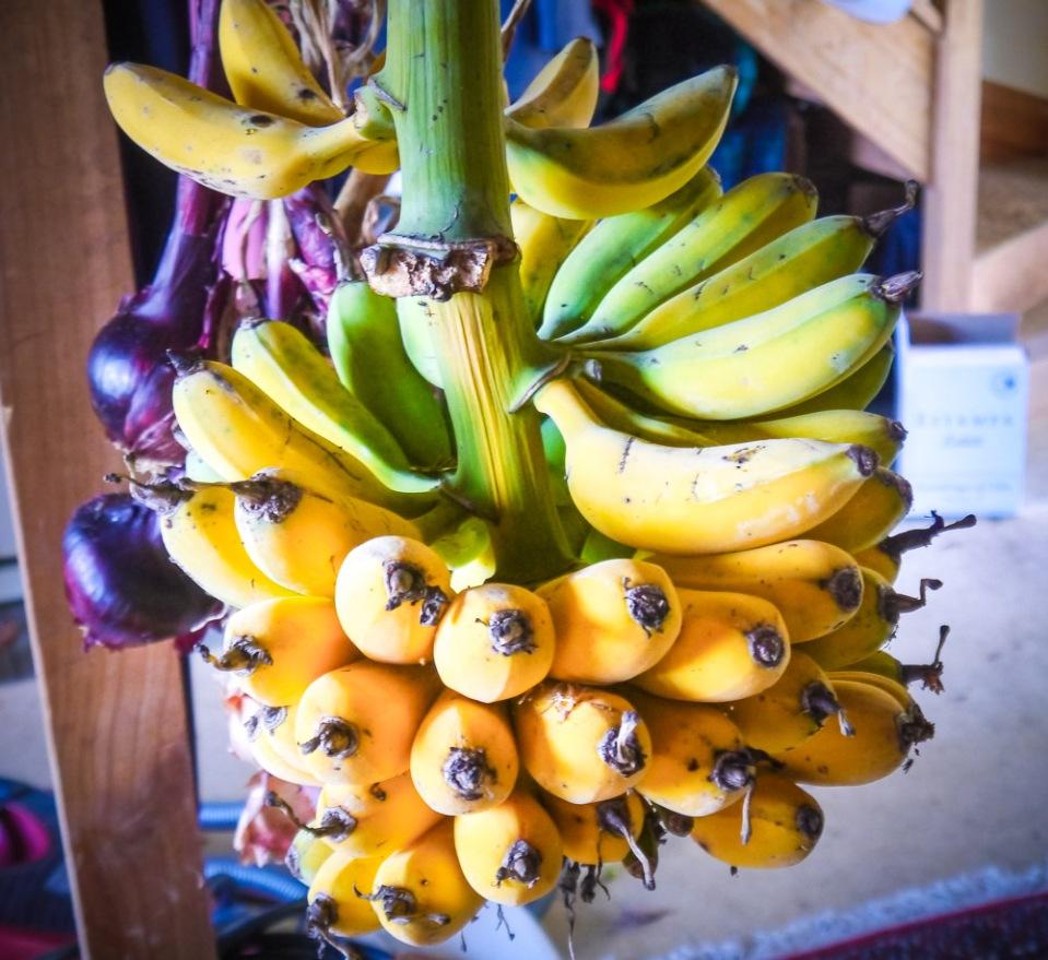 Bananas-1060727