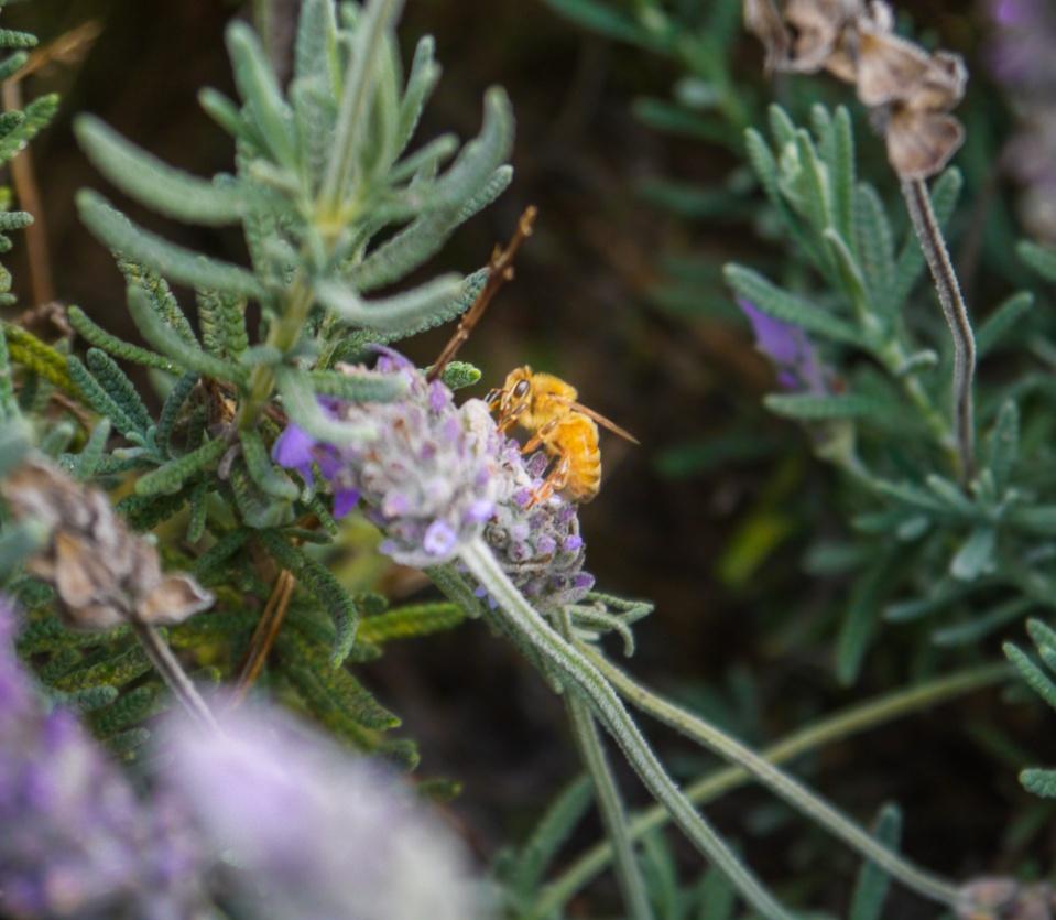 honey bee-1060719
