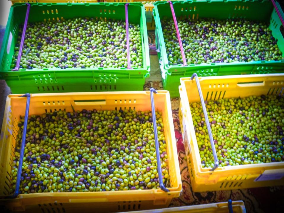 olive crates-1060724