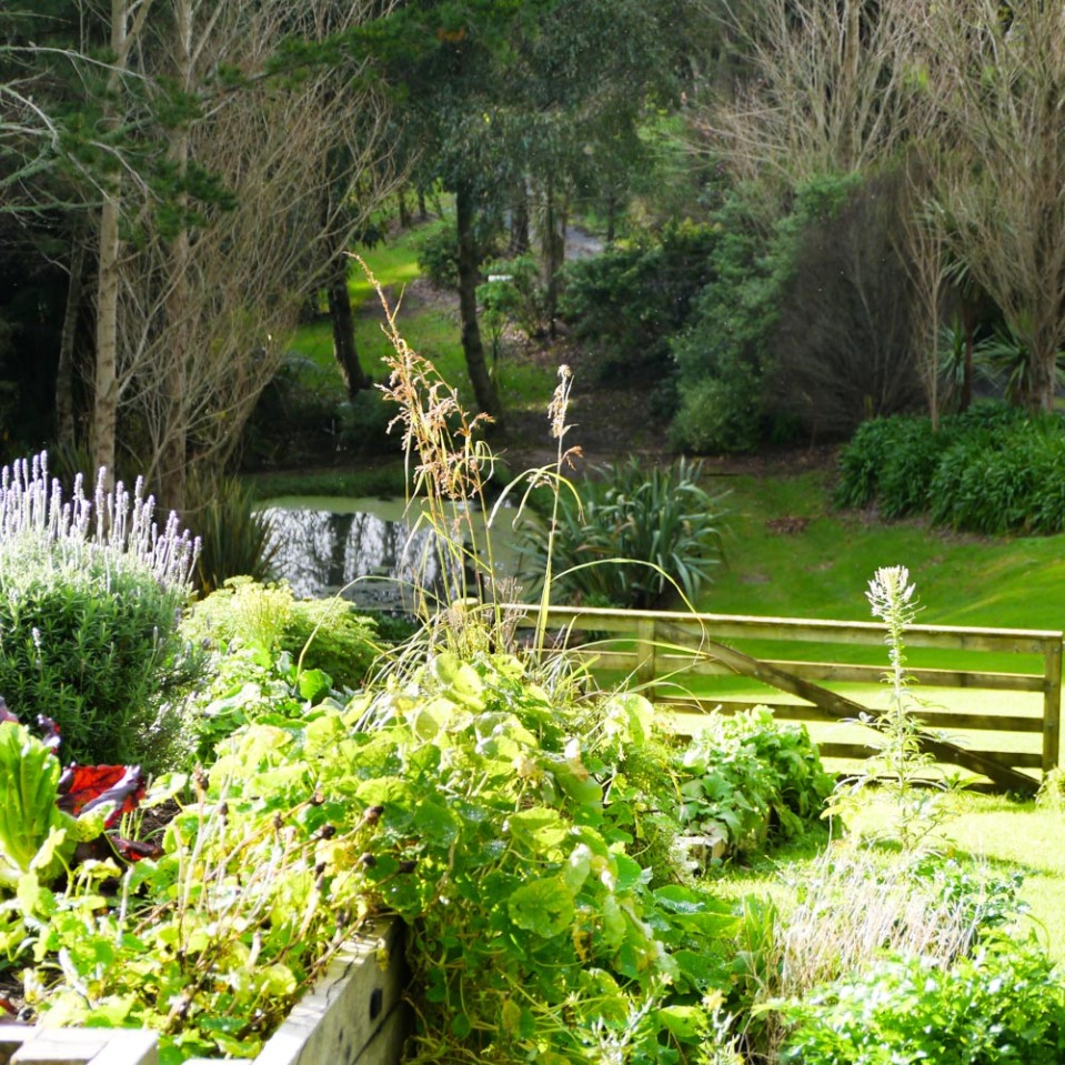 raised-bed-vege-garden