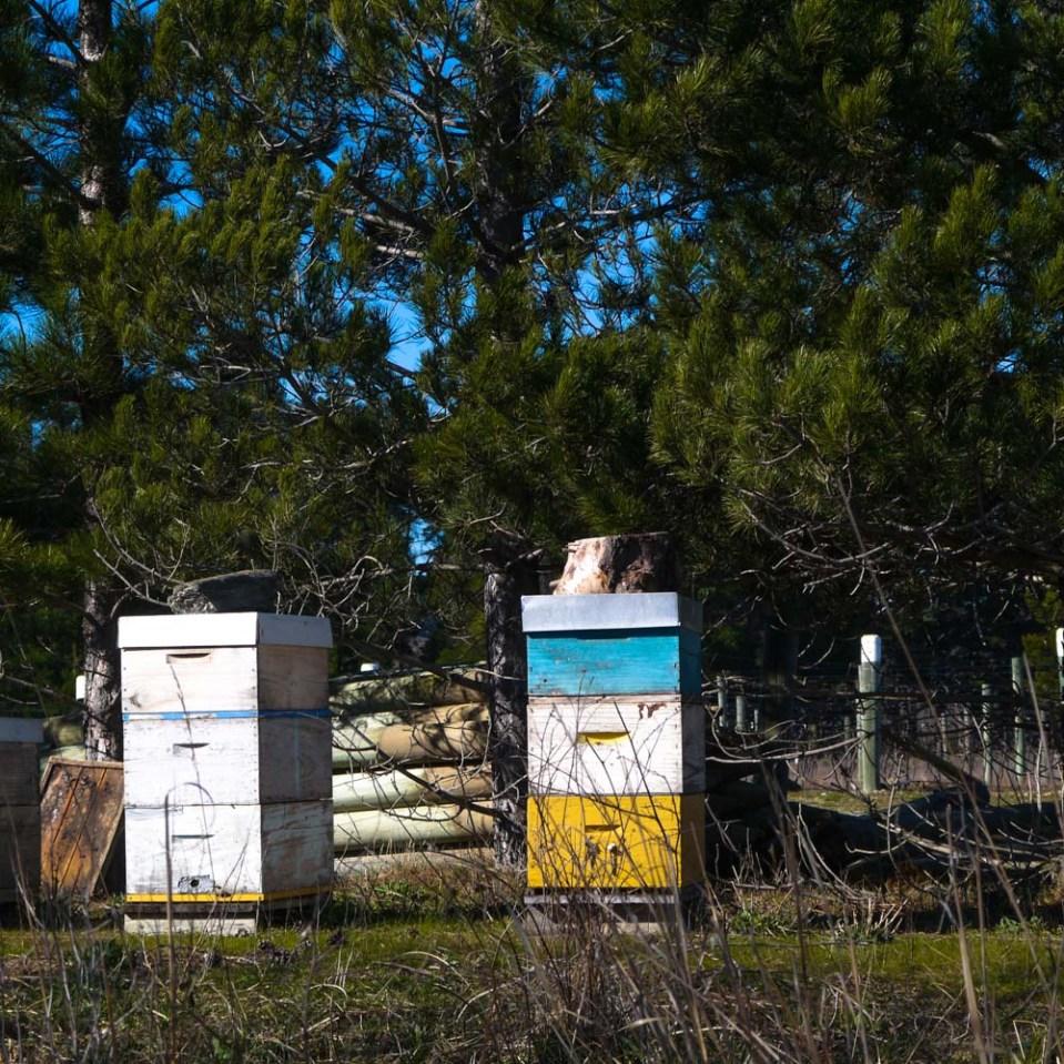 beehives-immigrants-vineyard-1080158