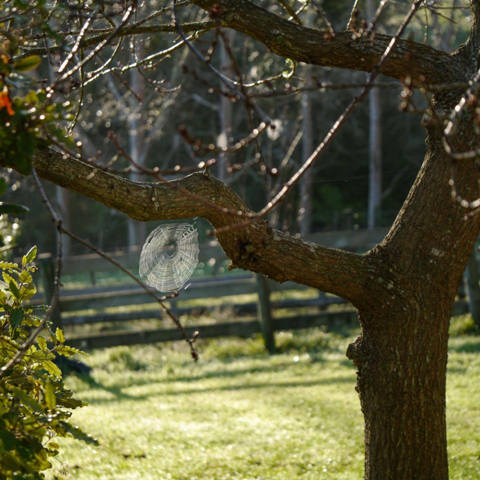 spider-web-1070683