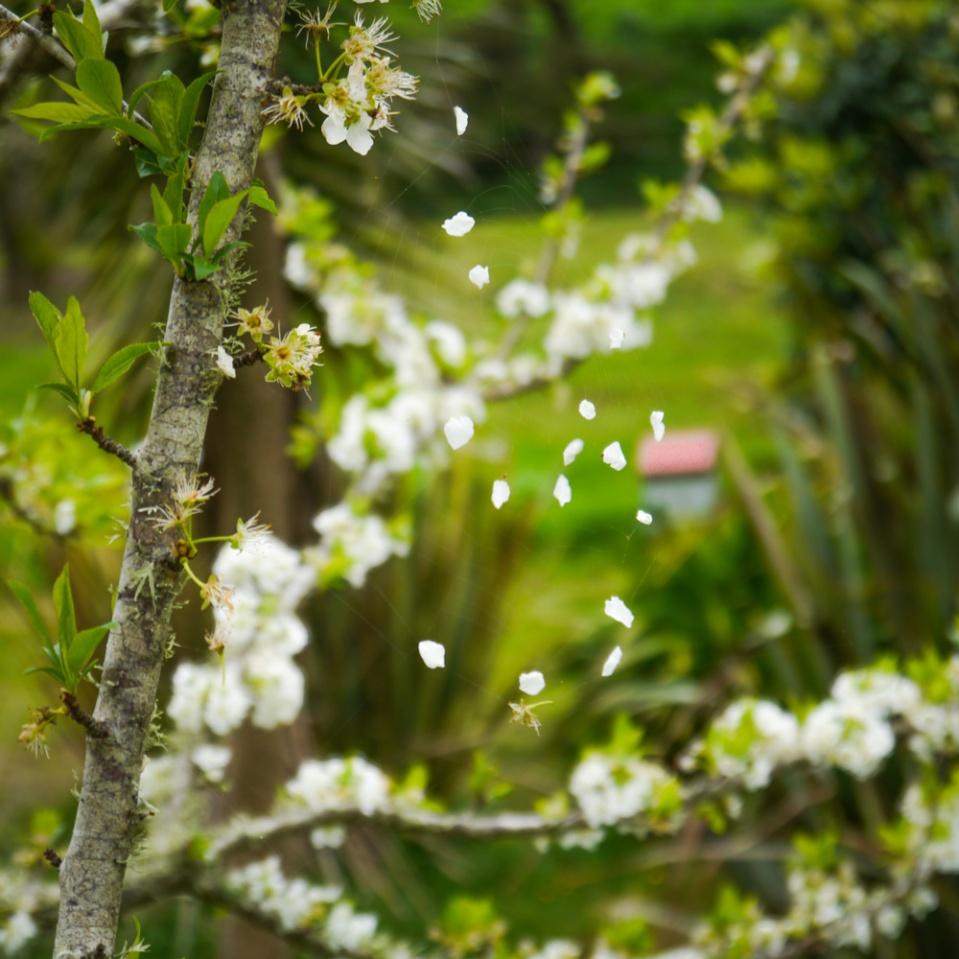 petals-1080654