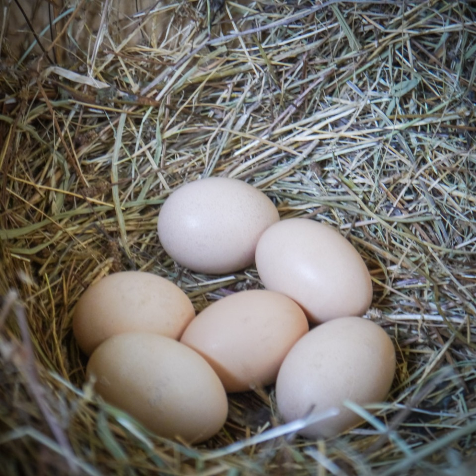 eggs-1080925