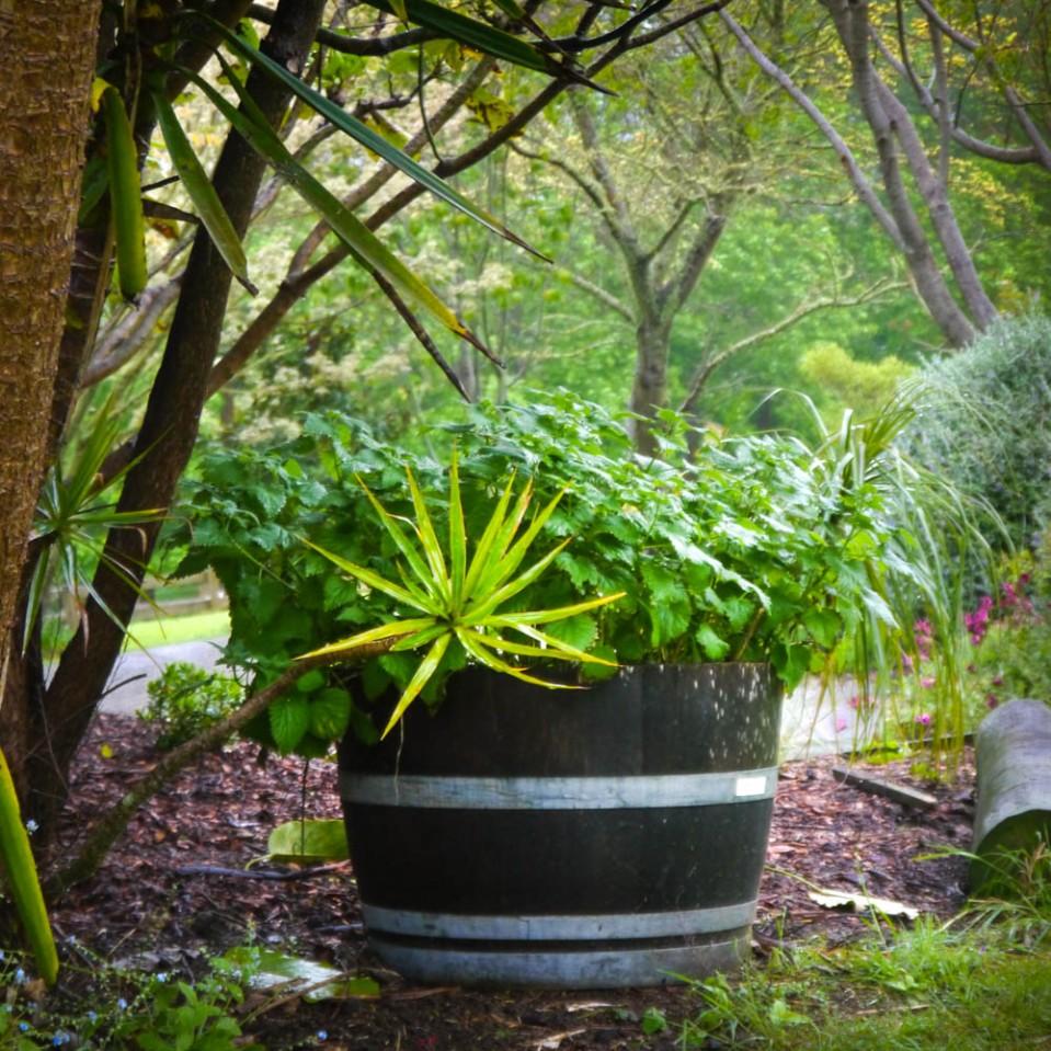 pot-of-nettle-1090032