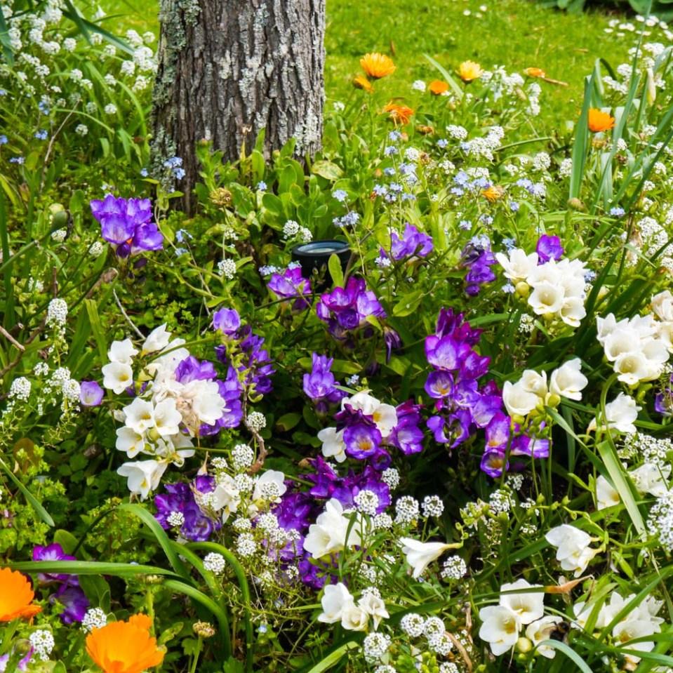 spring-flowers-1080783