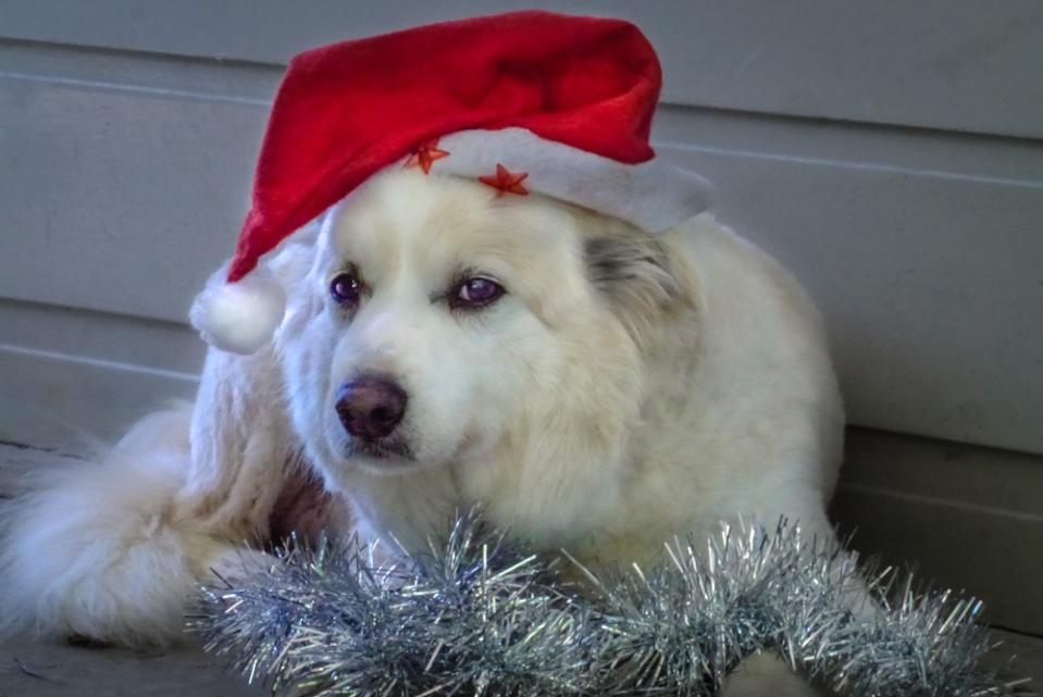 dan christmas-1100051