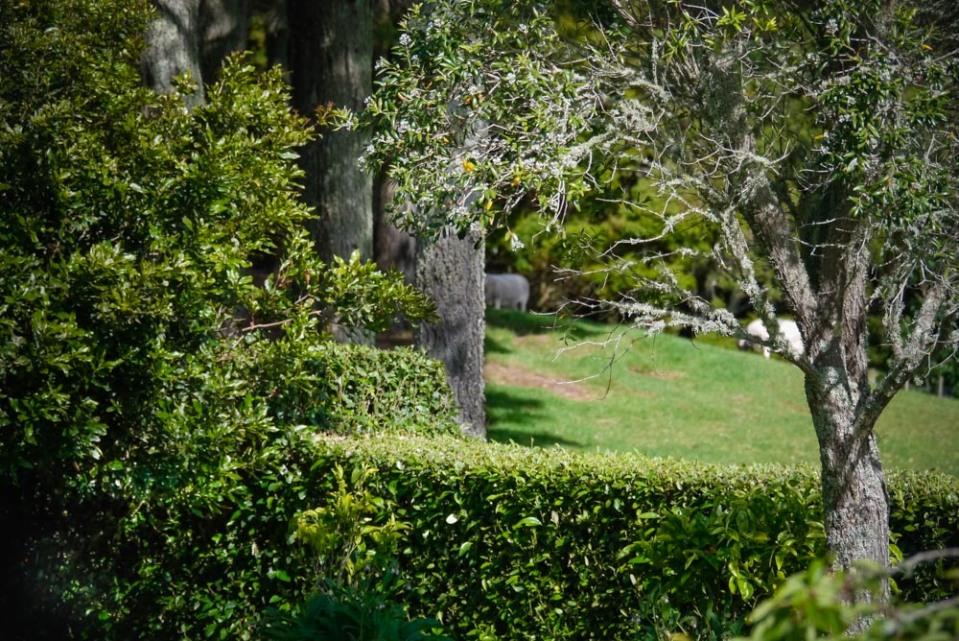 greenery-1100010