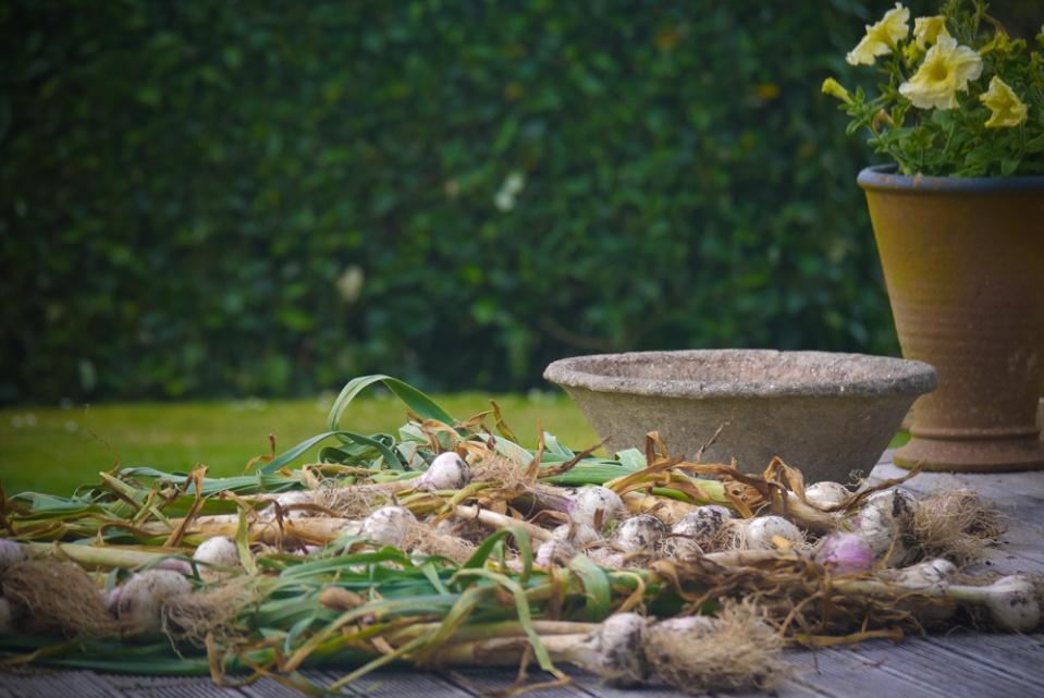 home-grown-garlic-1090815