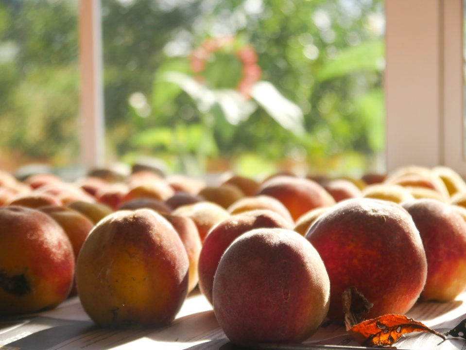 peaches-1120179