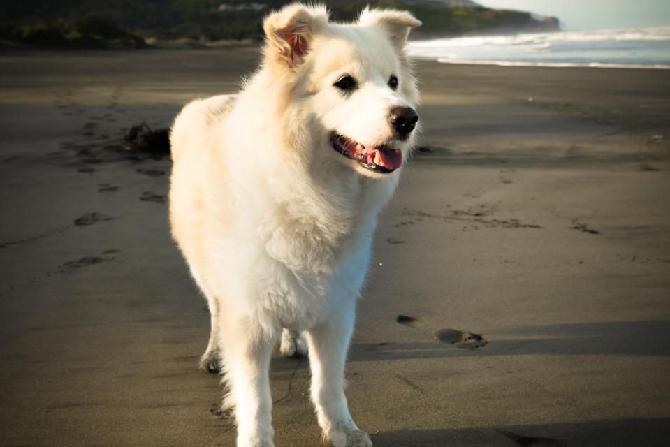 dan-at-the-beach-1140245