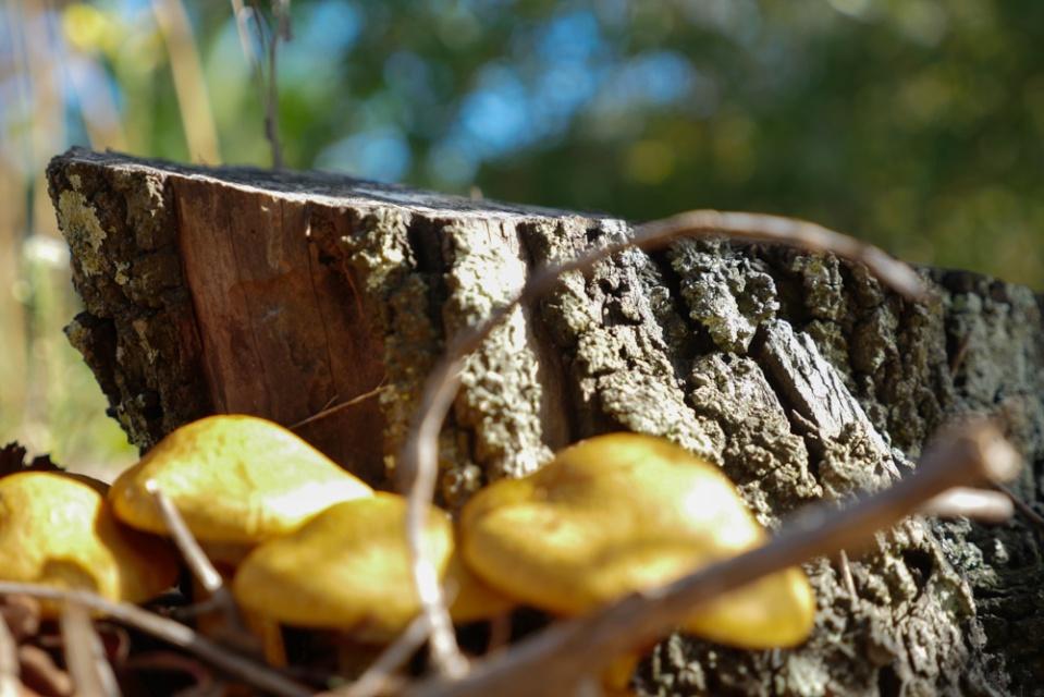 fungi-1140227