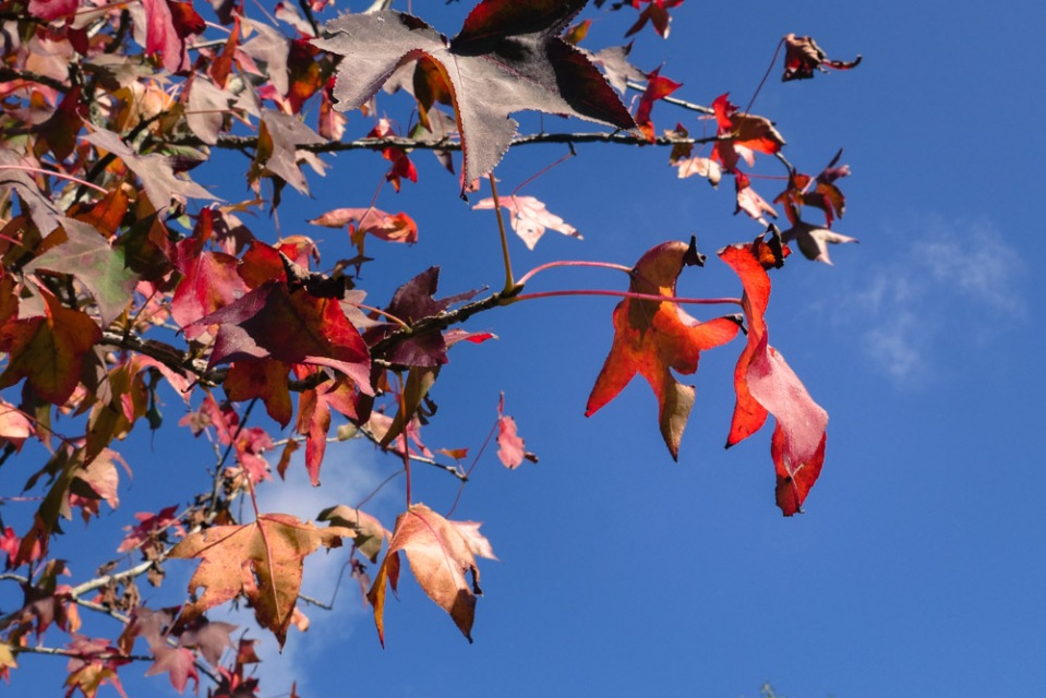 autumn leaves-1140797