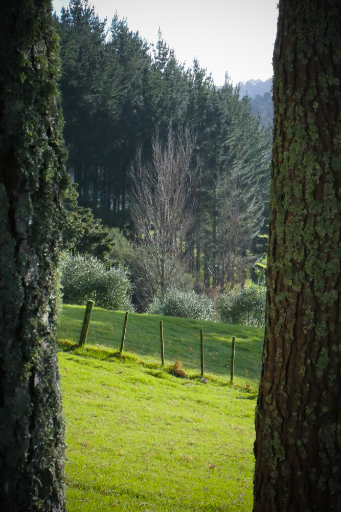 view-through-the-pines-1150338