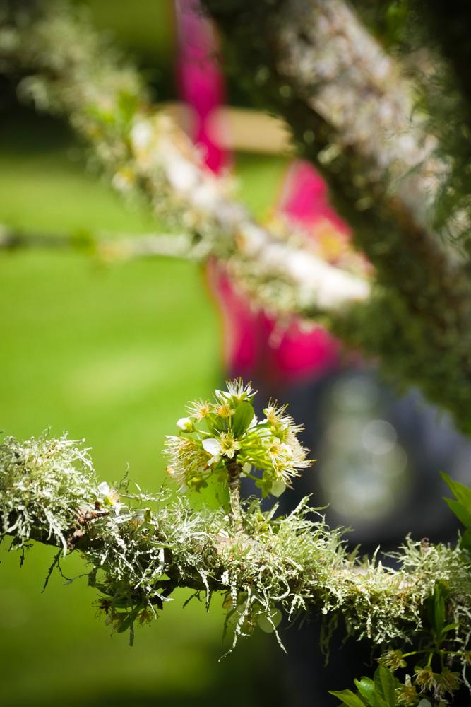 plum blossom-1180216