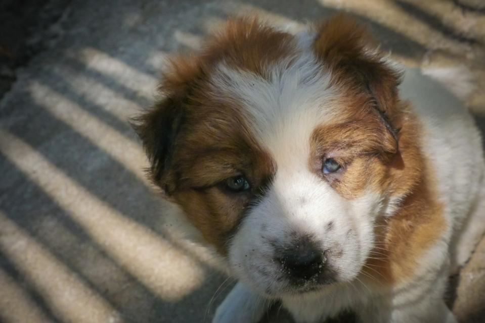 puppy-1170582