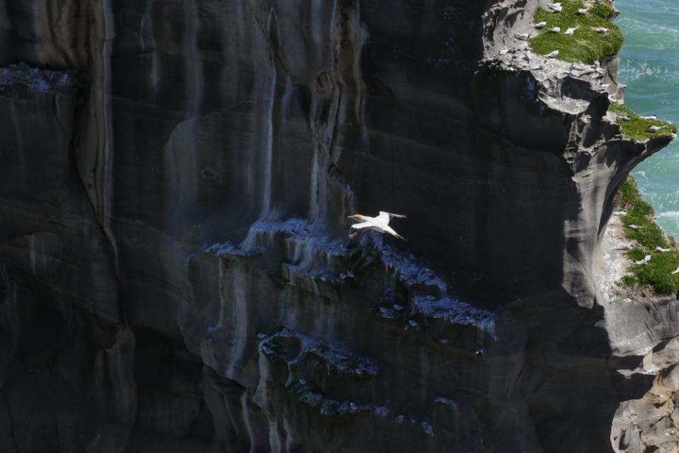 gannet rock-1180536