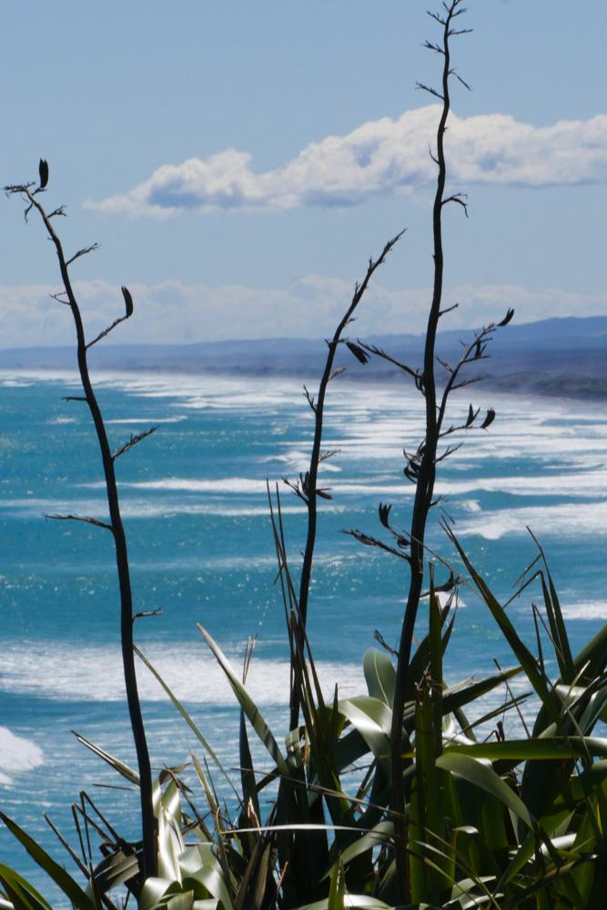 muriwai beach-1180571