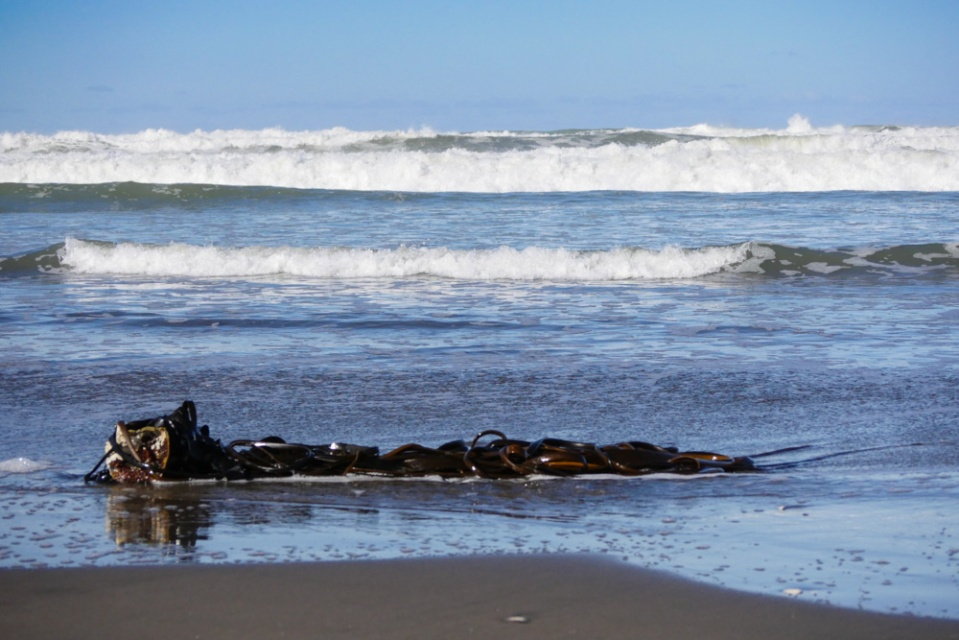 seaweed-1190777