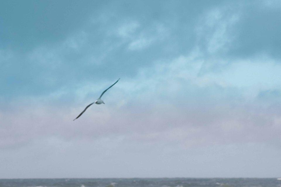 seagull-1190937