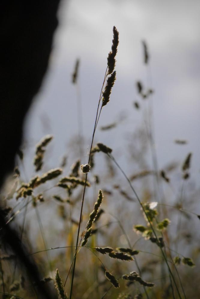 long grass-1200879
