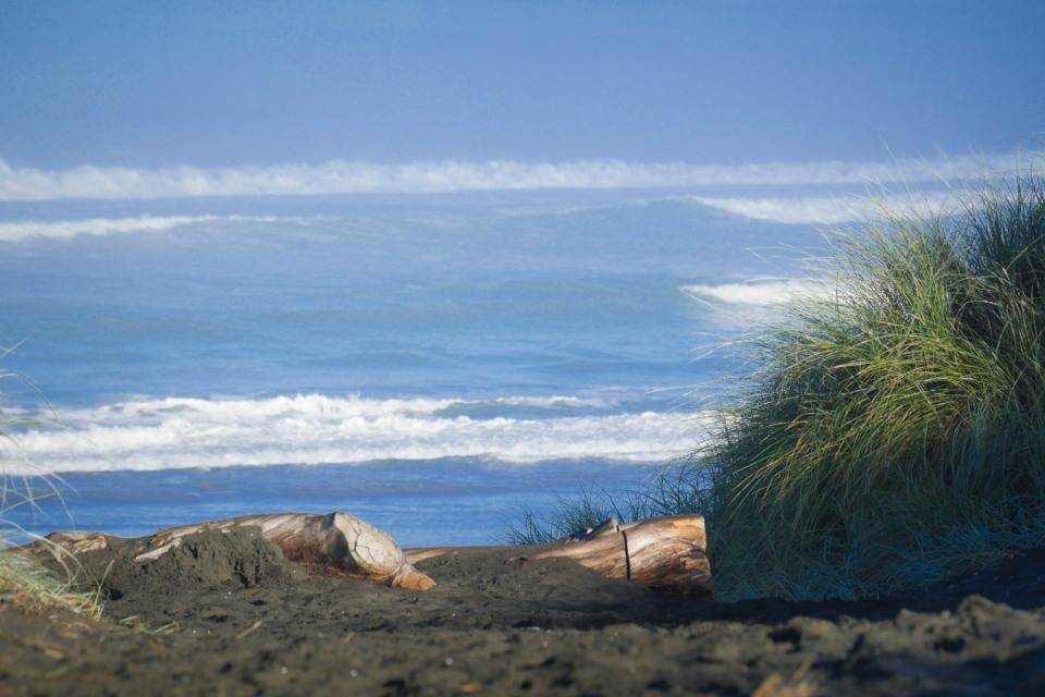 Muriwai beach and black sand