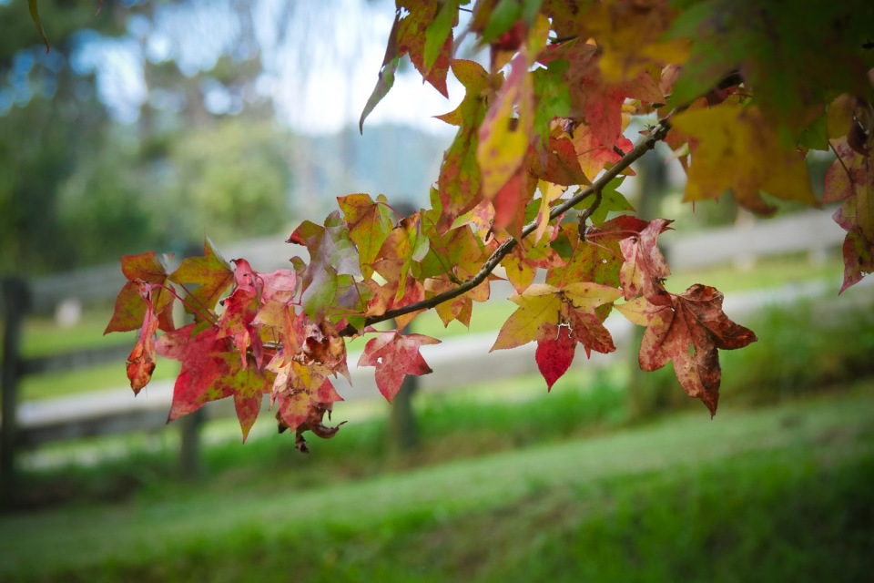 autumn leaves-1240806