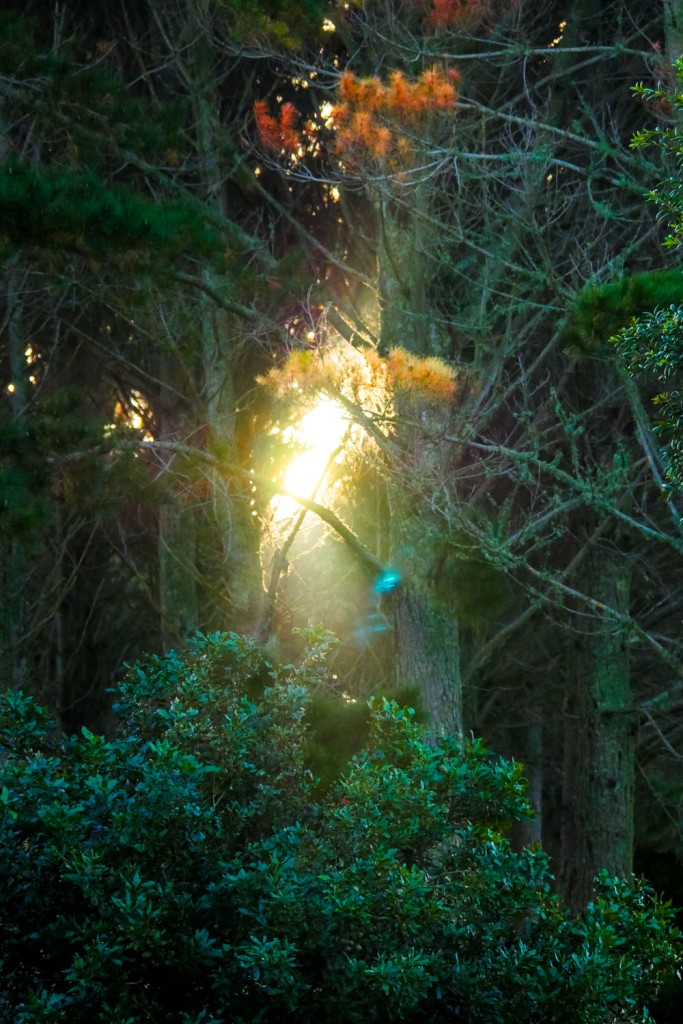 light through the pines