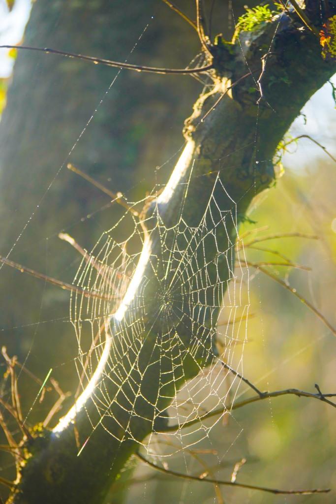 cobweb-1250489