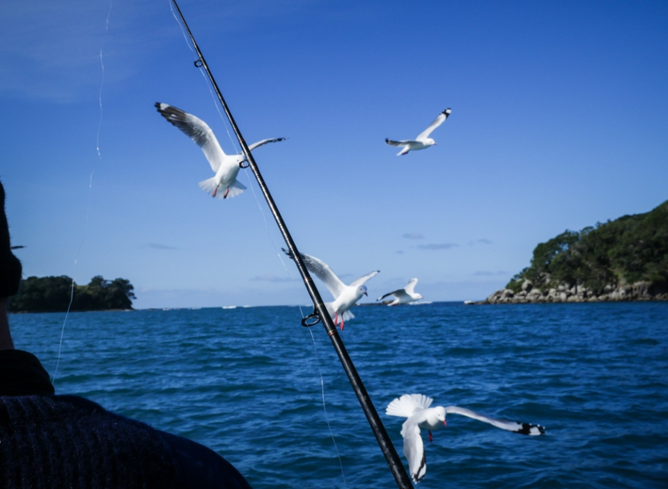 seagulls-1260520