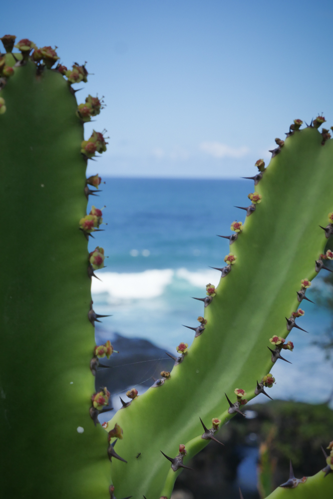 cacti-1260904