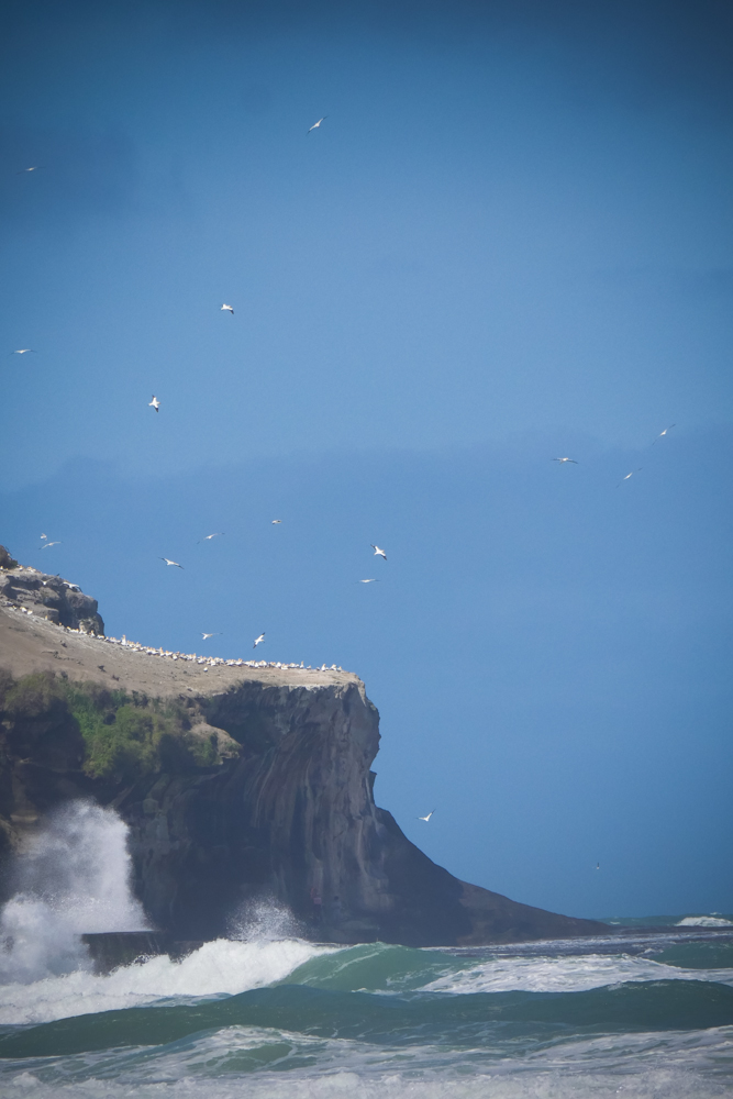 gannet-glistening-1270821