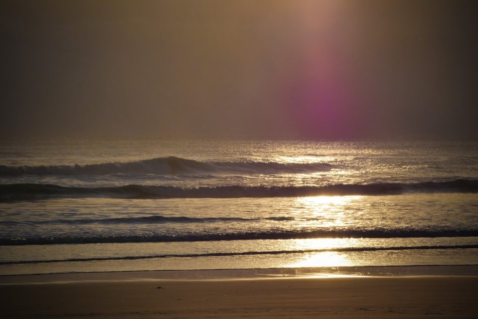 muriwai_beach-1270566