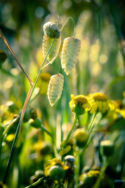 coastal-plants-1280208