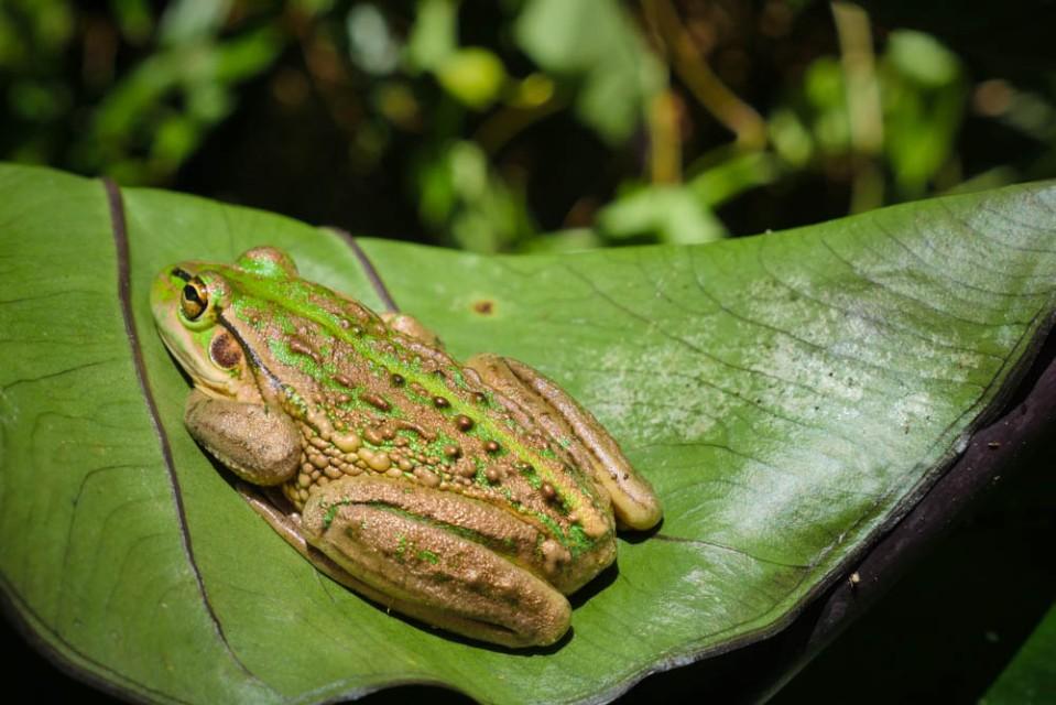 frog_pond_farm-1290598
