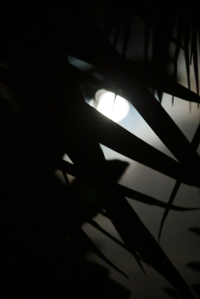 moonhiding-1290378
